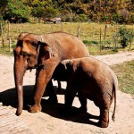 Travel Photo Thursday -- August 9, 2012-- Elephant Magic in Thailand