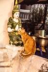 Travel Photo Thursday -- January 31st, 2013 -- Chiang Mai's Fabulous Felines