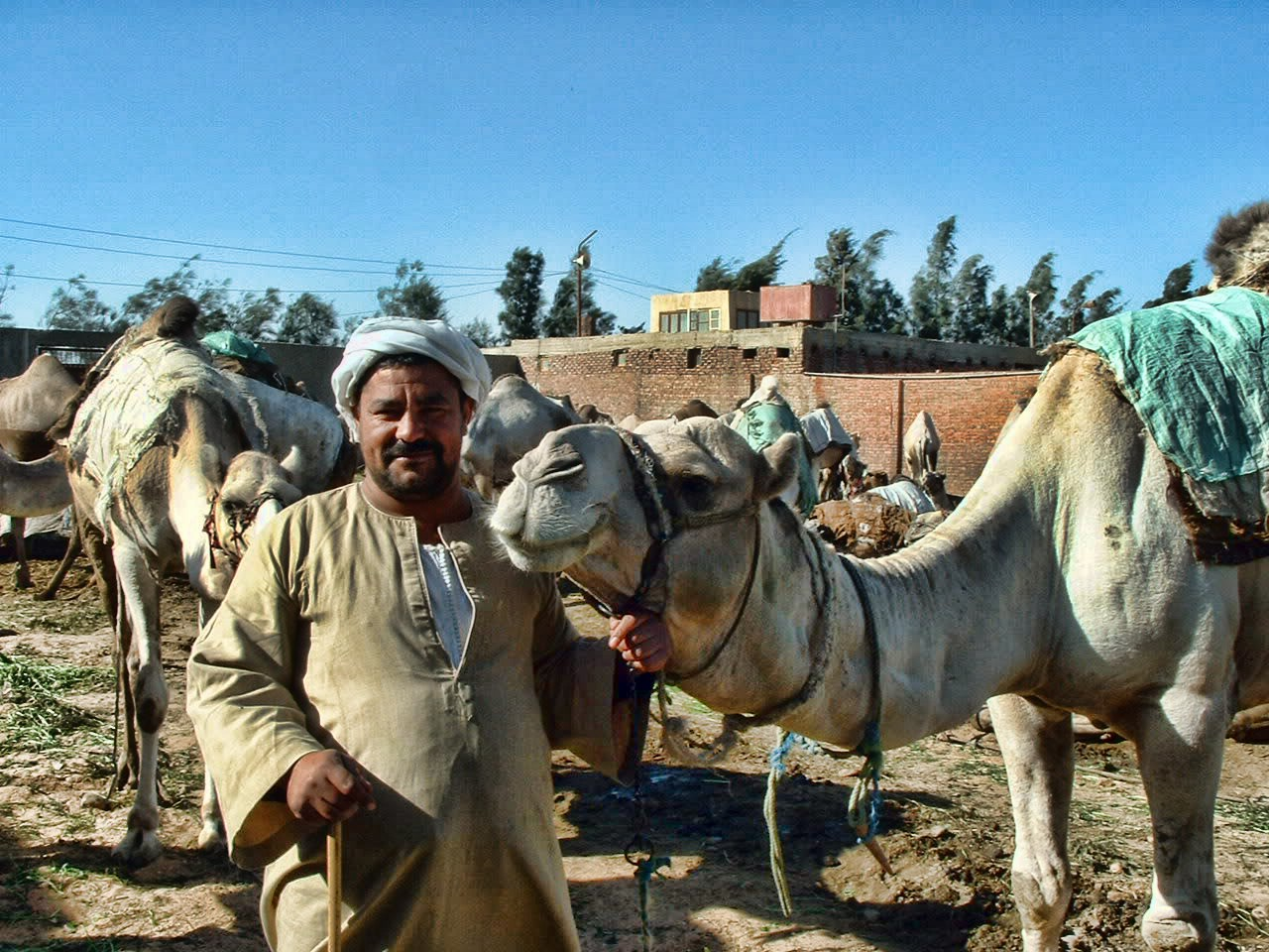 Barqash, Camel Market